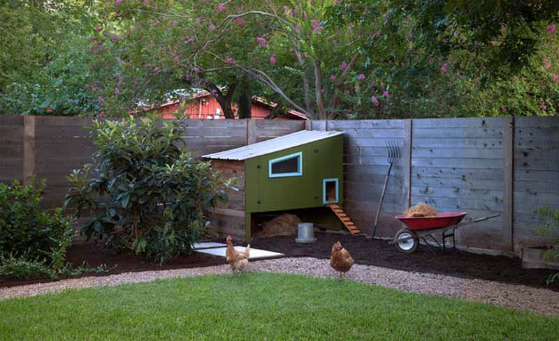 Pollaio in giardino con galline ovaiole al pascolo