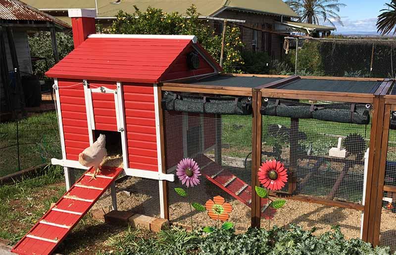 Anche nell'ambito di un orto potrete lasciare pascolare le vostre galline fuori dalla casina-corsa recintando le verdure da proteggere.
