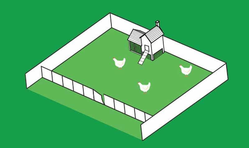 Pollaio per galline munito di corsa all'interno di un'area adibita a pascolo (consigliabile almeno 10 mq per gallina).