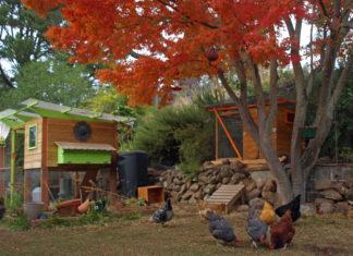 Pollaio: dove e come realizzarlo per il benessere delle galline | TuttoSulleGalline.it
