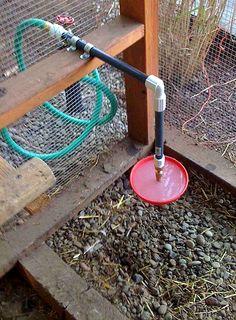 Abbeveratoio per galline collegato alla sistola dell'acqua