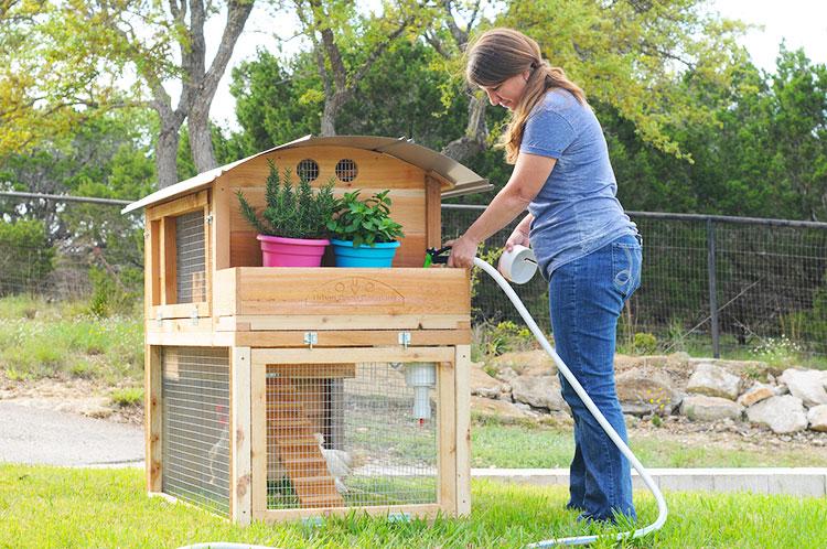 Abbeveratoio per galline dentro ad un piccolo pollaio urbano familiare
