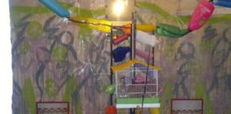 Gallina chiusa in una gabbia per canarini come opera d'arte - TuttoSulleGalline.it