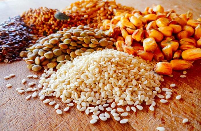 Mangime per galline ovaiole: ingredienti e dosi per 5 ricette equilibrate