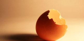 Gusci d'uovo: come riciclarli con 12 utilizzi alternativi e creativi   TuttoSulleGalline.it