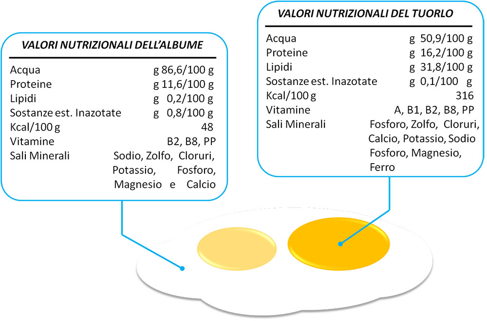 Valori nutrizionali dell'uovo