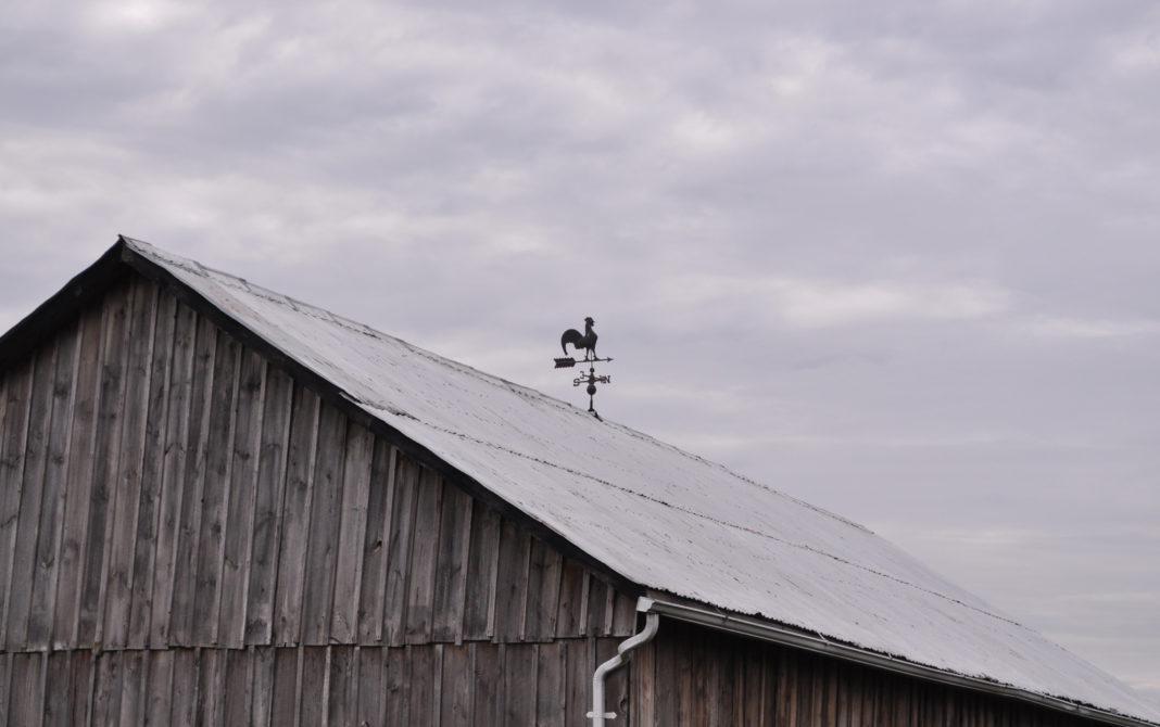 Gallo segnavento posto sulla sommità di un tetto
