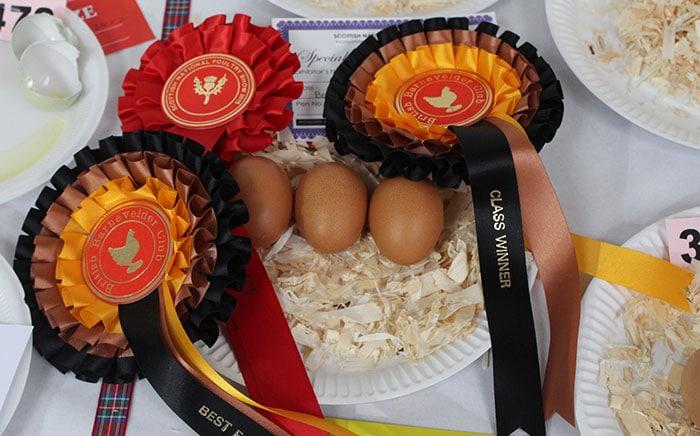 Bellissime uova di gallina ovaiola Barnevelder