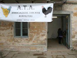 13° Mostra Avicola dell'Associazione Toscana Avicoltori (Firenze, 28-29 Gennaio 2017)   TuttoSulleGalline.it