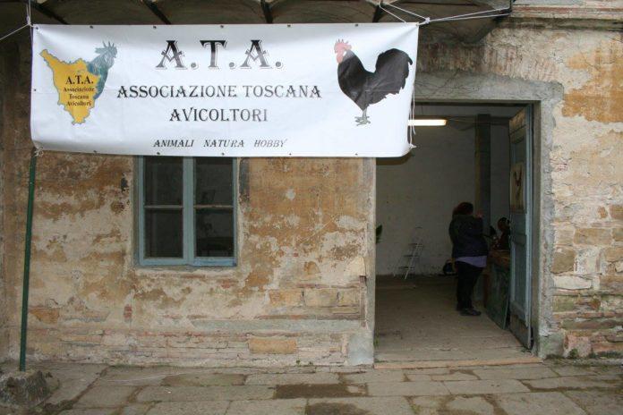 13° Mostra Avicola dell'Associazione Toscana Avicoltori (Firenze, 28-29 Gennaio 2017) | TuttoSulleGalline.it