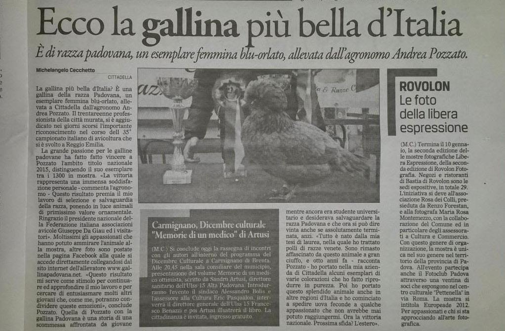 La gallina padovana (ovaiola e ornamentale) più bella d'Italia