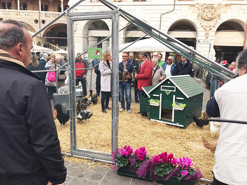 Le galline padovane di Andrea Pozzato in Piazza delle Erbe a Padova