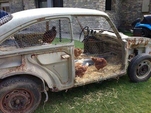 """Pollaio domestico e galline """"su Volks Wagen d'epoca"""""""