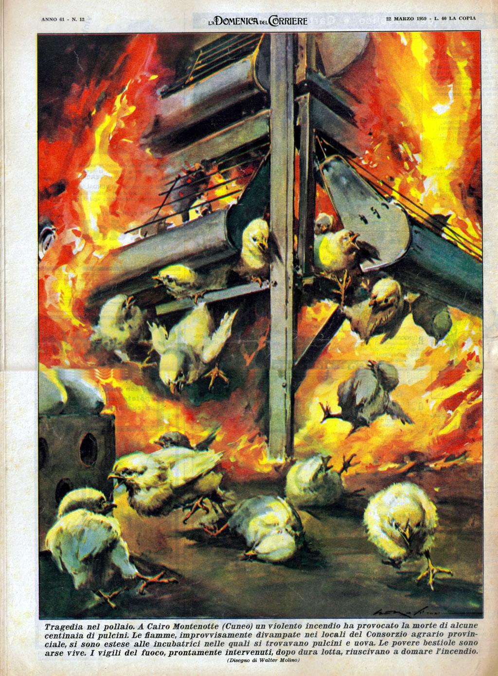 La Domenica del Corriere. Un incendio in un pollaio causa la morte di centinaia di pulcini