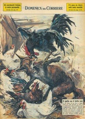 La Domenica del Corriere. Un gallo scaccia la volpe dal pollaio