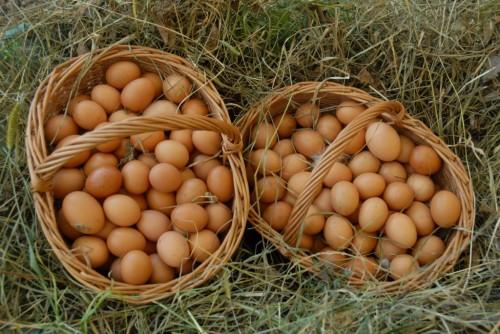 Uova da auto-produzione grazie al pollaio domestico