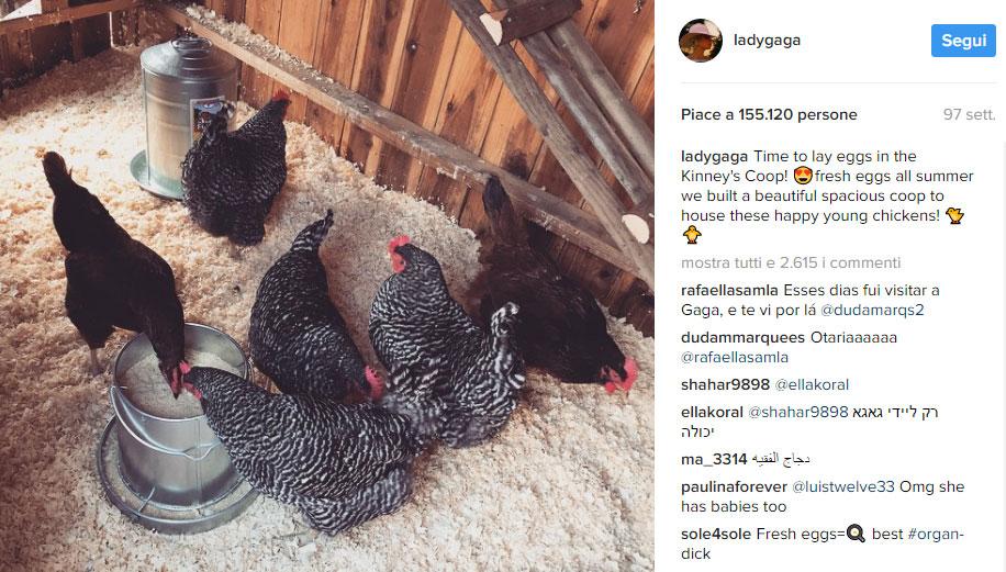 Lady Gaga e il suo pollaio con le galline