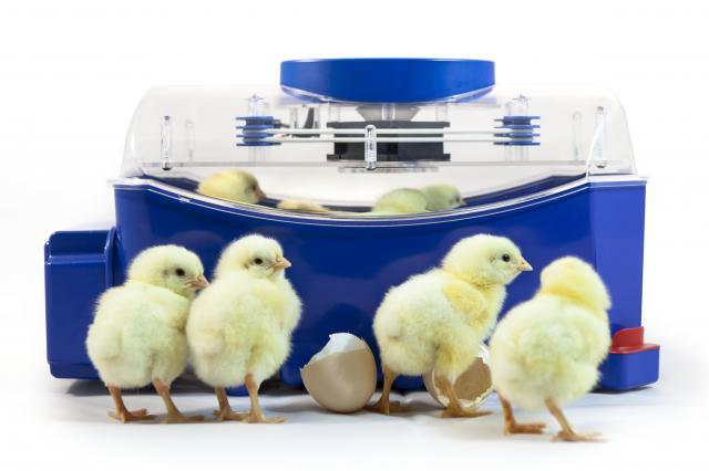 Incubatrice per uova Borotto Lumia 8