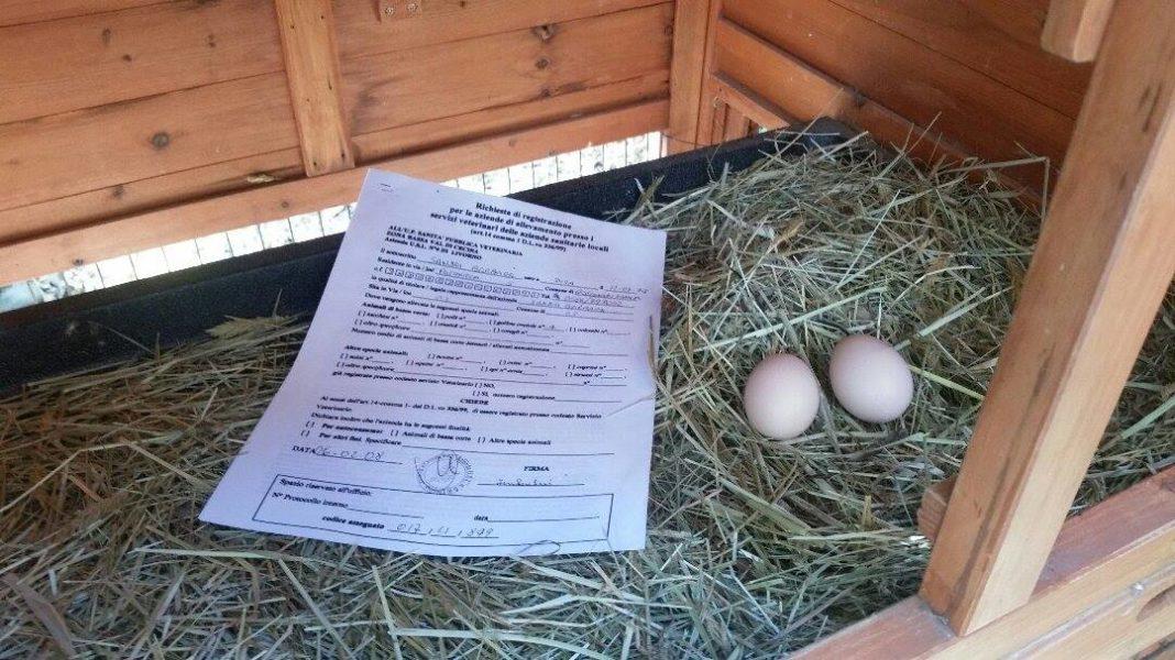 Registrazione pollaio per galline ovaiole