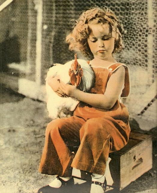Shirley Temple bambina con in braccio una bella gallina