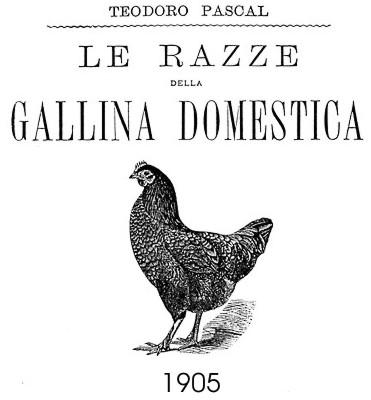 Teodoro Pascal - Le razze della gallina domestica