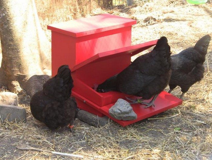 Galline che mangiano da una mangiatoia a pedale