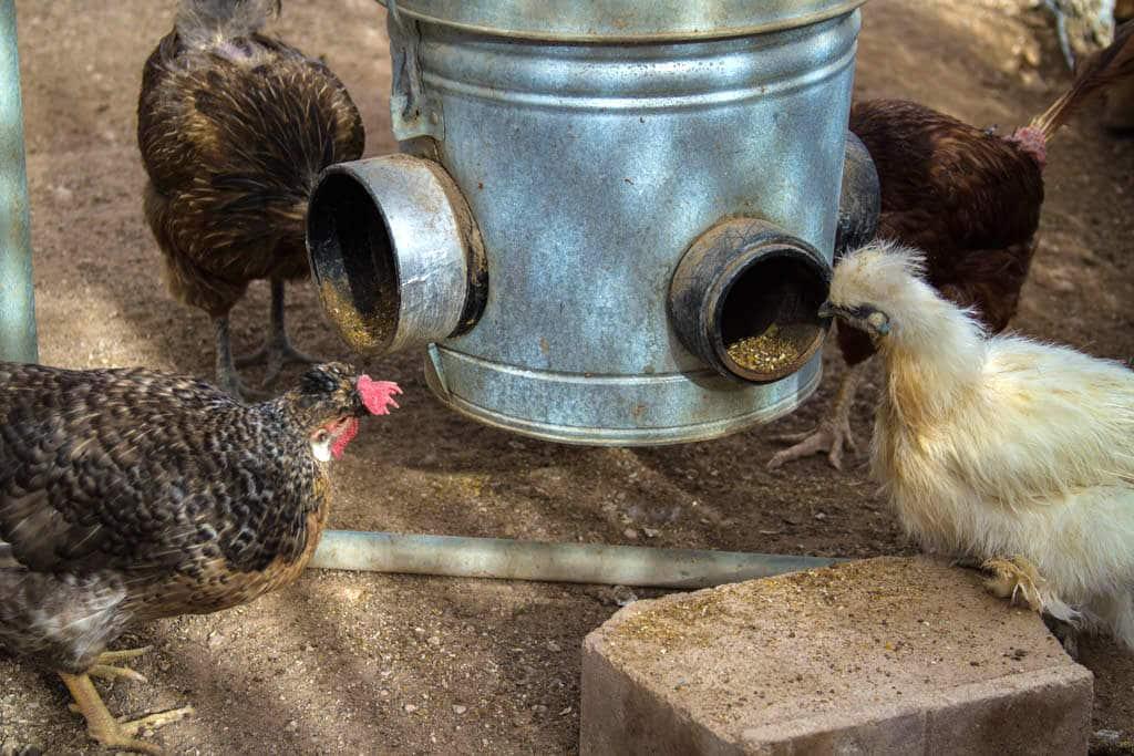Mangiatoia per galline fai da te ad oblò
