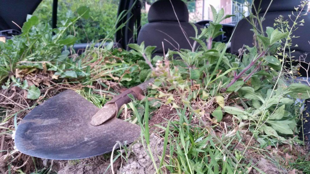 La raccolta delle erbe spontanee vicine a casa