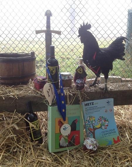 Allevamento i Polli del Drago - galline ornamentali e ovaiole