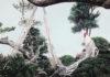 Onagadori, la razza ornamentale dalla coda-lunga originaria del Giappone