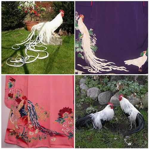 Tessuti giapponesi raffigurantigalli Onagadori dalla coda-lunga
