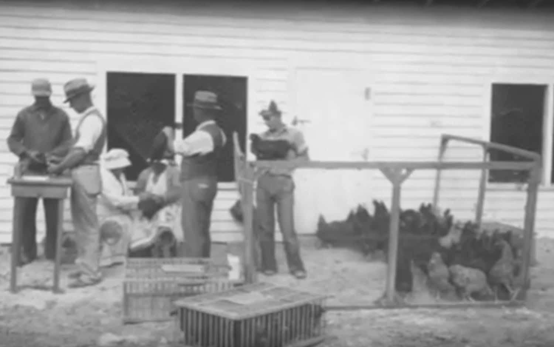 Allevatori di galline del New Hampshire dei primi del Novecento