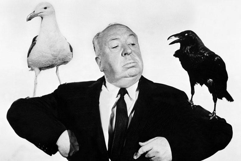 Alfred Hitchcock (alectorofobico) durante la realizzazione del film Uccelli (1963).