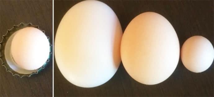 Uovo di gallina più piccolo al mondo