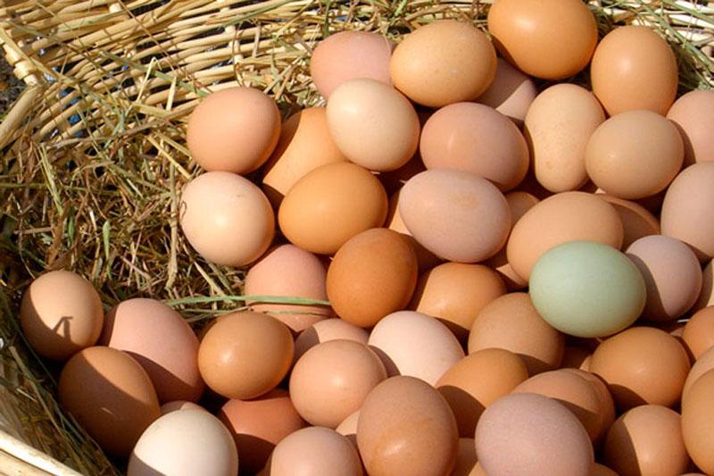 Come fare vendita diretta delle uova del proprio pollaio