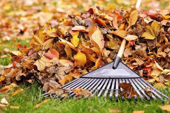 In autunno il prato torna ad essere lussureggiante e le foglie cadono