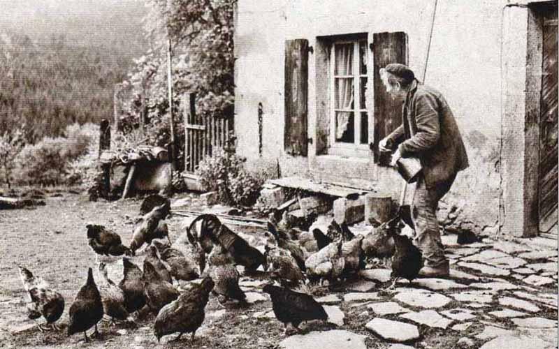 Aia Serchio con galline
