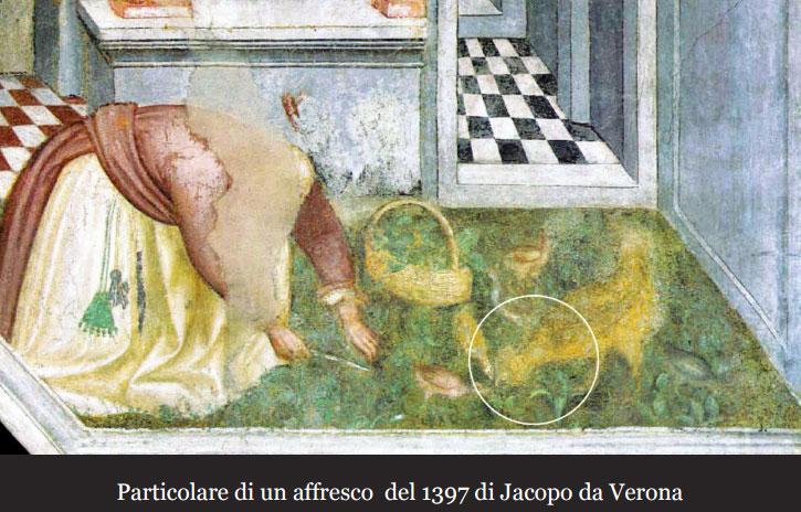 galline ciuffate riprodotto in un affresco da Jacopo da Verona nel 1397