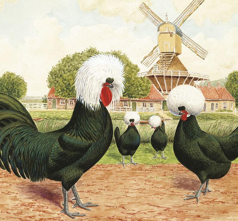 Gallo e galline Olandesi ciuffate raffigurate in un tipico contesto bucolico olandese con mulino a vento.