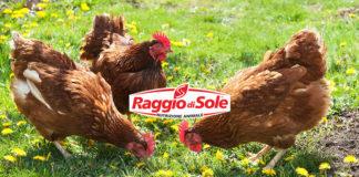 Raggio di Sole, mangimi per galline (anche NO OGM) | Tuttosullegalline.it