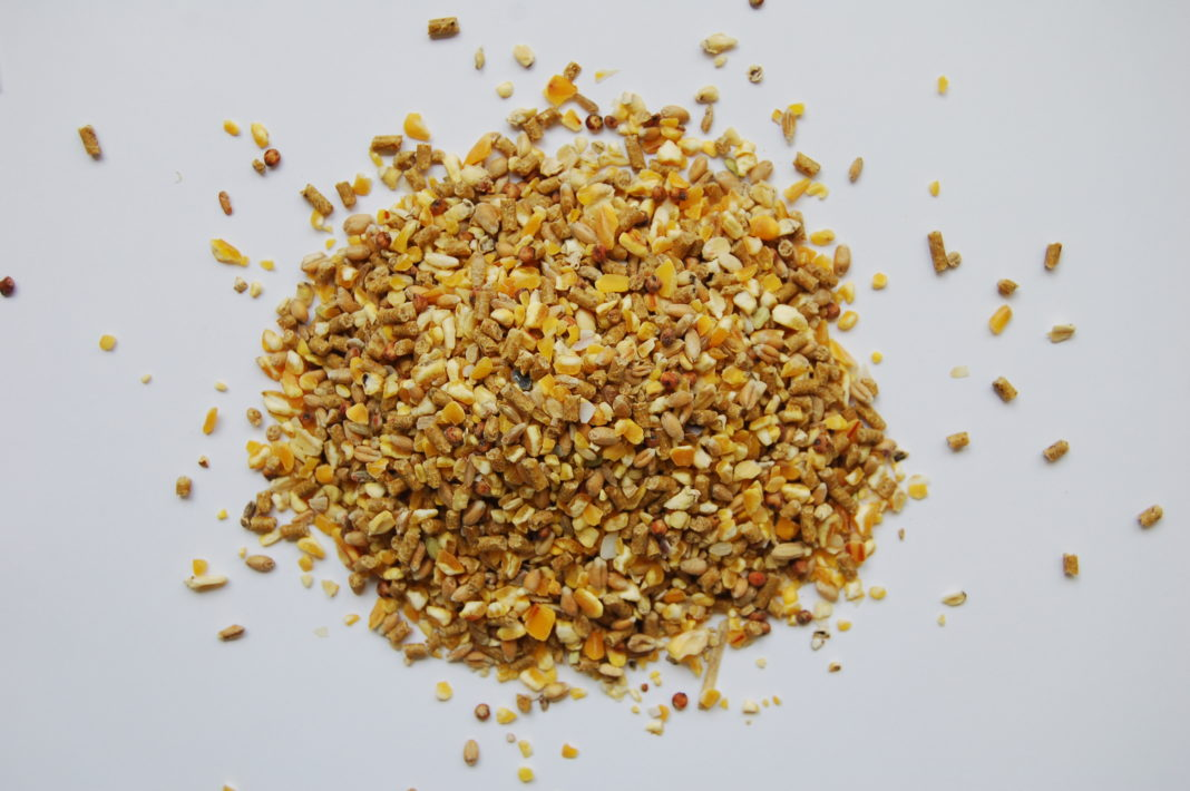 Becco d'Oro della linea Misti e Granaglie di Raggio di Sole, prodotto di eccellenza per galline ovaiole
