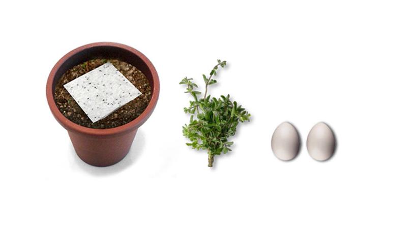 Bio-tessuto in feltro pre-seminato, la maggiorana e le uova. Una parte dell'occorrente per realizzare la ricetta dell'uovo assoluto