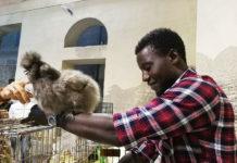 Fattoria di Campagna, Allevamento galline ovaiole e ornamentali | Ancona, Marche