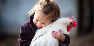 Gallina e pollaio nell'evoluzione del rapporto tra uomo e animale domestico | Tuttosullegalline.it