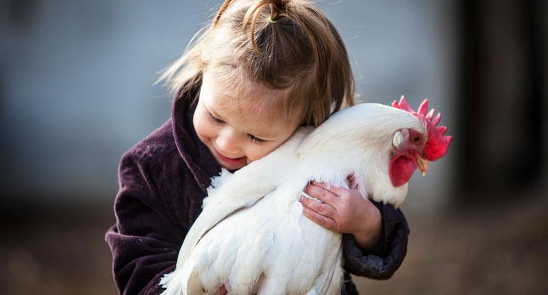 LA gallina come animale d'affezione e compagnia | Tuttosullegalline.it