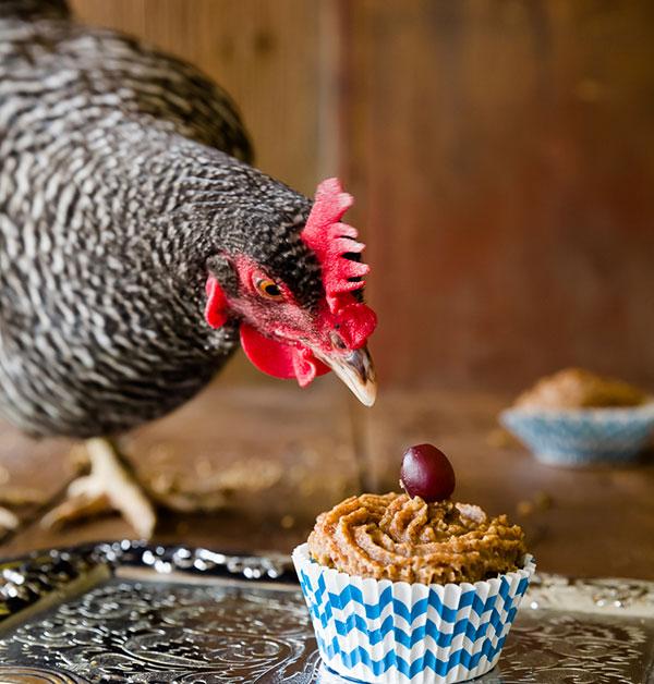 Alimenti che le galline non devono mangiare