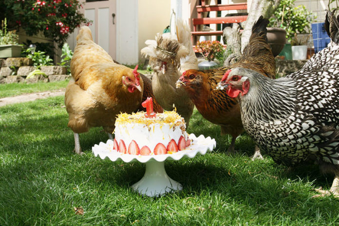 Cosa non dare mai da mangiare alle nostre galline: cibi tossici da non dare | Tuttosullegalline.it