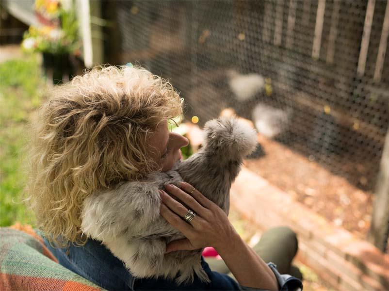 La crescente tendenza della detenzione di galline come animali familiari