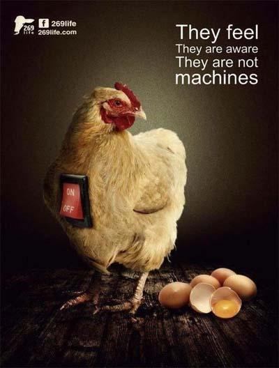 """Campagna """"esseri senzienti"""" in favore della gallina"""