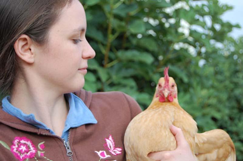 La gallina è un animale domestico che può essere allevato anche come animale d'affezione o da compagnia